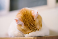 shy (ChCh Chen) Tags: cat cats kitten kitty lifes lifestyle shy sony zeiss 50mm
