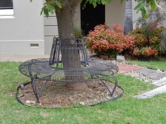 Circular Bench on the Lawn (mikecogh) Tags: fitzroy bench empty circular metallic lawn frontgarden nandinadomestica shrub round