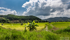 FARMING (Michael Leshets) Tags: field sky landscape soil nature travel blue cloudscape cloudy thailand tree summer plants grass countryside cloud flora agriculture hill panoramic farm outdoors grassland idyllic hayfield chiang mai malika