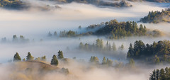 Sonoma County, California (Bob Bowman Photography) Tags: fog california trees hills mist landscape sonomacounty backroads pano nikon