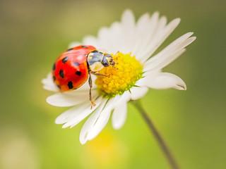 i'm ladybee
