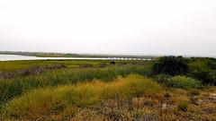 Bolsa Chica Slough (EmperorNorton47) Tags: bolsachicaecologicalpreserve huntingtonbeach california photo digital spring marsh saltmarsh slough bridge