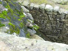 675S Machu Picchu
