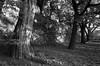 Afternoon Light II_bw (Joe Josephs: 3,166,284 views - thank you) Tags: centralpark nyc newyorkcity travel travelphotography joejosephs parks peaceful quiet riversidepark tranquil urbantravel urbanexlporation urbanparks â©joejosephs2017 ©joejosephs2017 blackandwhitephotography blackandwhite trees noperson light fineartphotography fineartprints