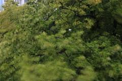 Regennasser Baum in Bewegung (Pascal Volk) Tags: berlin althohenschönhausen berlinlichtenberg baum tree árbol carrujo treetop crown baumkrone regen rain lluvia 67mm langzeitbelichtung longexposure largaexposición slowshutter tiempo weather wetter pflanze plant planta canoneos6d canonef24105mmf4lisusm rodenstockndfilter8x canonspeedlite600exiirt manfrotto mt055xpro3 468mgrc2 motionblur 7dwf bewegungsunschärfe flora