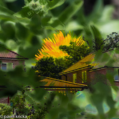 P50_5584-15 (pavelkricka) Tags: multiple exposure suffolk shotley peninsular holbrook open gardens 2017 garden no 8