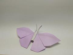 Butterfly by Hideo Komatsu (Zephyr Liu) Tags: origami kami paper hideo komatsu butterfly bicolor