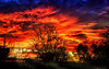 Treehouse Sunset in Winter (Kevin_Jeffries) Tags: treehouse new newzealand winter redsky nature kevinjeffries antipodes vibrant colour flickrsbest silhouette