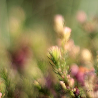 Friday blur