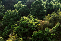 Outline Glow (Picocoon图茧) Tags: outline glow tree forest mountain landscape nature green sunlight crown