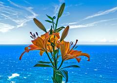 Lirios en la ventana. (Lilies on the window). (Víctor Pacheco.) Tags: casa flor flower lirio lily mar océano cielo sea ocean sky lirios lilies home