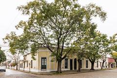 Facing Arellano Park - San Antonio de Areco (BlueVoter - thanks for 1.7M views) Tags: sanantoniodeareco tree arbol
