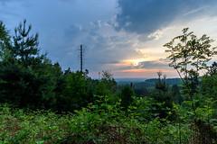 Toter Baum (webpinsel) Tags: ausblick dachsberg feuerwachturm frühling halternamsee landschaft morgendämmerung morgenstimmung münsterland natur sonnenaufgang wolken morgens