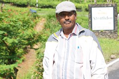 Sri Lanka, tea pickers (31) (walterkolkma) Tags: srilanka tea pickers teapickers centralhighlands nuwaraeliya strathdon teaestates women laborers tamils sonya6300