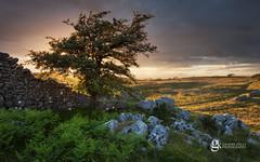 Holme Fell Light (GraemeKelly) Tags: graemekellyphotography graeme kelly photography landscape light landscapes holme fell limestone pavement hawthorn tree sunset cumbria nature