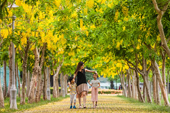 _MG_9783 (鹽味九K) Tags: goldenshowertree tainan canon yellow may 70200mmf28lll 5dll parenting people sinying tunnel beautiful tree love child 佳能 新營 台南 親子 小孩 阿勃勒 五月 黃金 gold taiwan 台灣 south