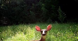 Earful