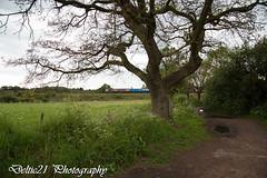 20170518-IMG_8034 (deltic21) Tags: severnvalley severn british brblue britishrail preservation preserved rail railway shed 66 gbrf