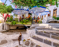Parikia, Paros (Kevin R Thornton) Tags: d90 nikon travel street parikia mediterranean greece cat paros egeo gr
