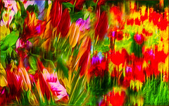 noonish tulips (♣Cleide@.♣) Tags: © ♣cleide♣ brazil 2017 ps6 photo art digital painting texture flowers diptych artdigital exotic netartii atree