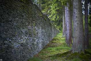the woods alongside the wall