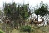 New Mexico Elk Hunt 28