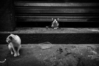 Gatos de rua / Stray Cats