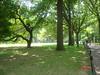Central park. Nueva York (EEUU)