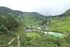 Sungai Palas (iparky) Tags: cameronhighlands malaysia tea sungaipalas sungaipalasbohteaestate bohtea