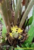 Palm Grass with Flowers in the Ground, Sheraton Gardens, El Salvador