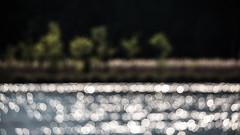 Erste Sommerboten (IIIfbIII) Tags: sommer müritz müritznationalpark mühlensee ankershagen mecklenburg