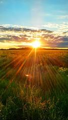 Warm evening (eikeblogg) Tags: lowsun sunset labdscape rural countryside field sundown reflections grass mobilephotography