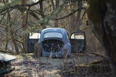 68/17  - flieg, kleiner Käfer flieg! - (mariburg) Tags: lostplaces abandoned rotten marode forgotten ruin decay desolate derelict cars rustycars auto canoneos5dmarkiv canonef70200mmf28lisiiusm