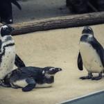 Penguins have fun thumbnail