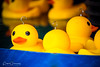 Plastic 'Hook A Ducks' Funfair Game (Peter Greenway) Tags: swimming happy fair ducks funfair plastic flickr petergreenway eyesbeak fairground rubberducks orangebeak entertainment