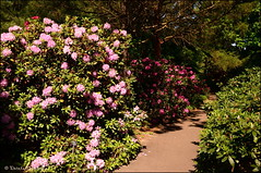 DSC_8799 (facebook.com/DorotaOstrowskaFoto) Tags: ogródbotaniczny kwiaty powsin warszawa