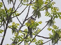 Blue Jay (Boulder Flying Circus Birders) Tags: bluejay cyanocittacristata bluejaycolorado bluejayboulder wildbirdboulder wildbirdcolorado wildbirdcompany formerwildbirdcenter notwildbirdsunlimited birdseed birdwalk saturdaybirders oldstvrainroad lyons colorado eileenrutherford