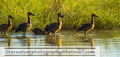 _DJA3410 copy (naturephotographywildlife) Tags: kruger wildlife scenery animals birdlife a99ii africa park