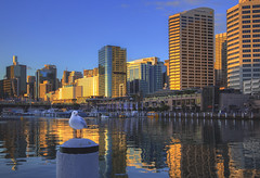 Sunset Selfie (S♡C) Tags: seagull sydney darlingharbour sunset reflections
