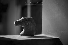 Horse logan (Naoak_photography) Tags: light daylight indoor dark shadow shadows rimlight wall white black bangkok horse model daytime