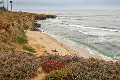 A Gray Day at Sunset Cliffs (Jill Clardy) Tags: sunsetcliffs sandiego ca pacificocean cliff ocean waves sea beach cove maygray surf surfers 201705294b4a4439 cloudy day