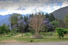 107A1384 (Tarun Chopra) Tags: canoneos5dsr tree bhutan photography 2017 ef24105mmf4lisusm