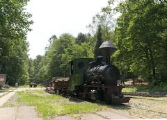 Herrenleite - 2017 (Gerd Schmidt) Tags: historischefahrzeuge herrenleite feldbahnmuseumherrenleiteherbstfahrtage2014 feldbahn museumsbahn eisenbahnmuseum dampflok dampflokomotive krauss 600mm steam