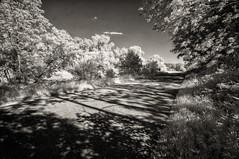 Another brazen day (citrusjig) Tags: pentax kx infrared irconverted fullspectrum wisconsin blackandwhite toned sigma1020mmf456 bw090redfilter