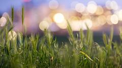 Cereals (PixTuner) Tags: pixtuner night lights bokeh green dof