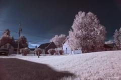 (Adam C Images) Tags: nikon d800 full frame infrared hoya r72 false colour 720nm photoshop cc lightroom verona ontario canada 20mm f18g ed nano crystal coat