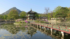Gyeongbok Palace, Seoul (in_my_skin) Tags: seoul spring southkorea korea asia blossoms flowers palaces