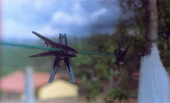 Hanging there (a.ninguem) Tags: film photography pentax k1000 filme kodak nature close sunny 16 35mm morungaba