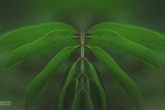 e-lias-59 (e-lias hun) Tags: d3100 helios44m4 macro closeup manfrottomonopod photomanipulate nature plants elias karcag hungary