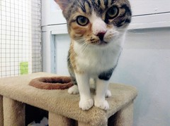 Dotty - 1 year old spayed female